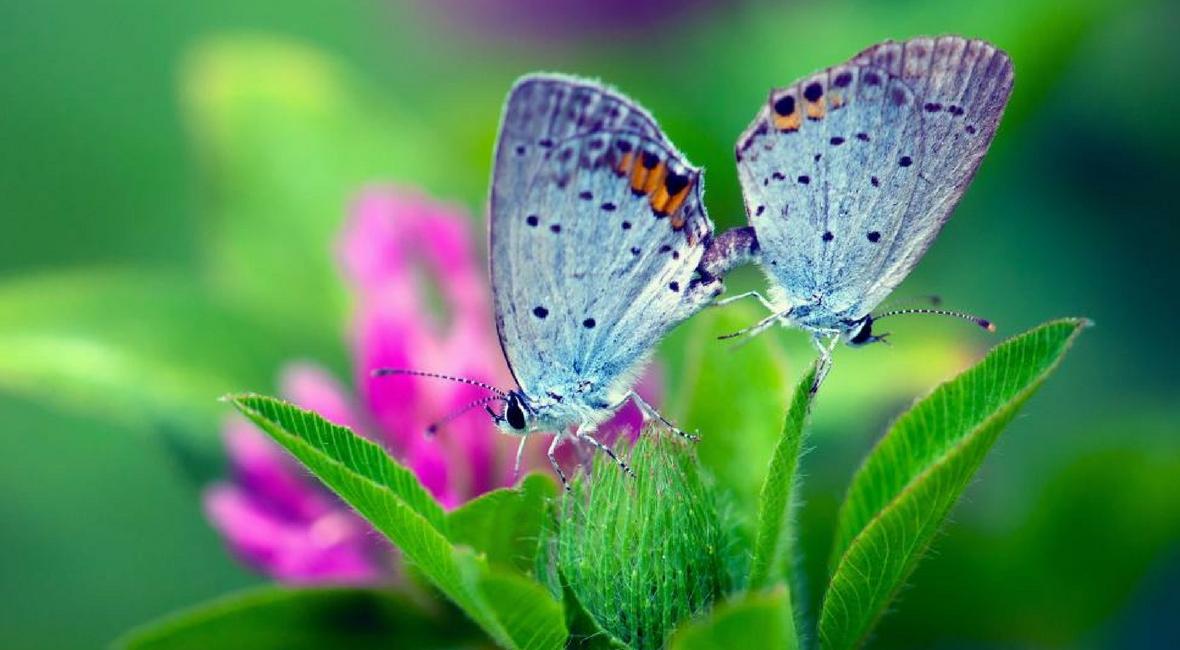 Interview Jennifer Weerman - Van rups tot vlinder